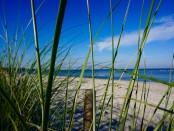 Blick durch Strandhafer auf die Ostsee in Rerik