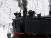 Molli Bahn Kühlungsborn