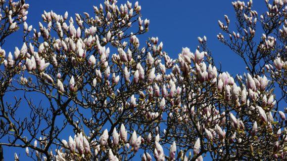 Frühling in Rerik