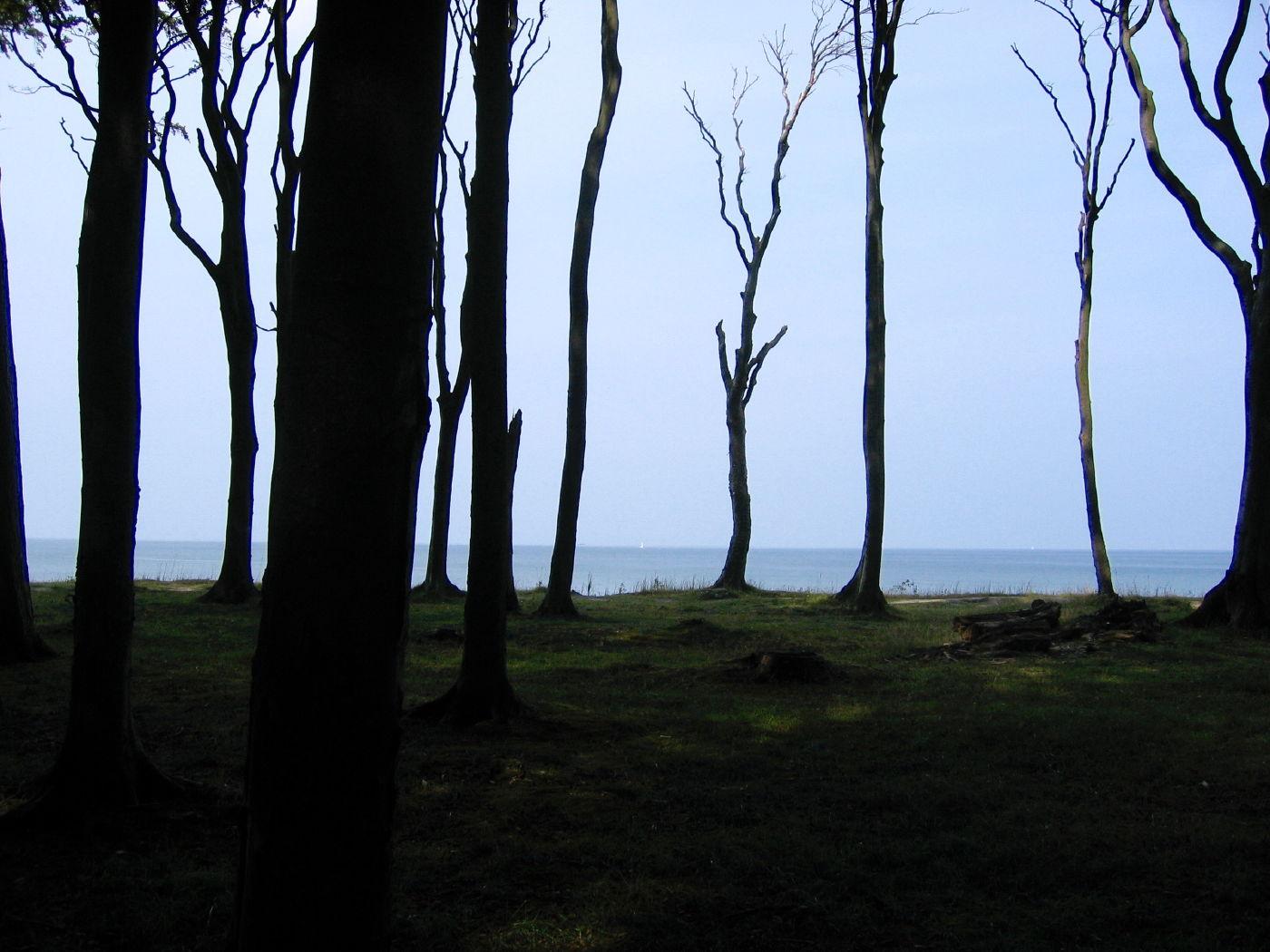 Blick aus dem Gespensterwald Richtung Ostsee